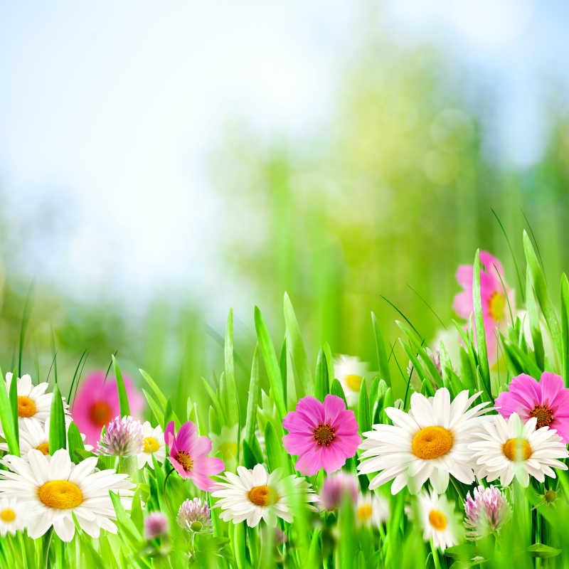 草地上的野花背景