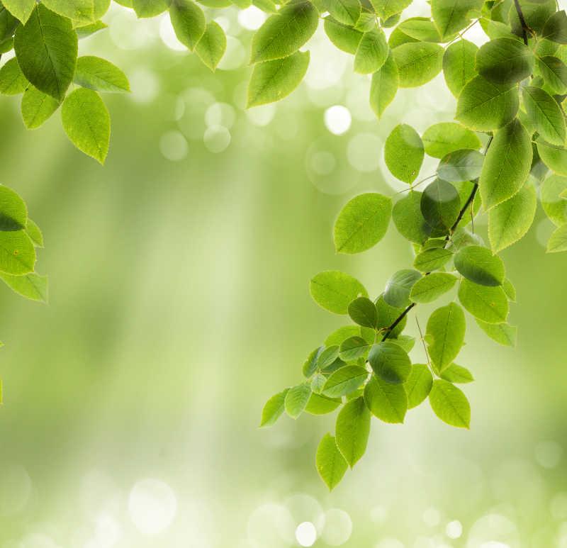 清新的绿色背景
