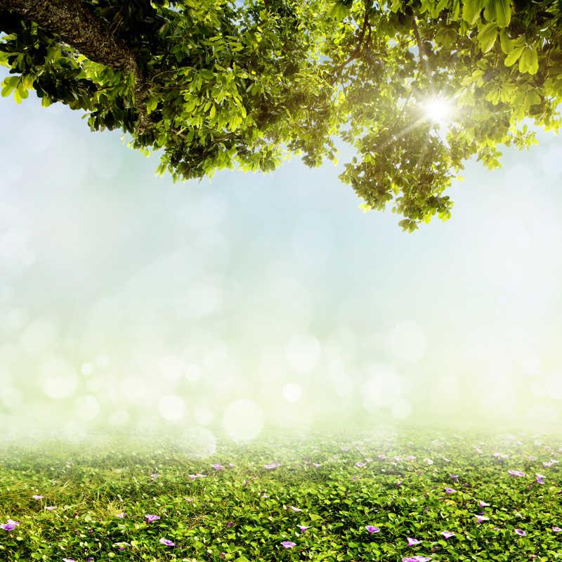 绿树和地面上的花自然背景