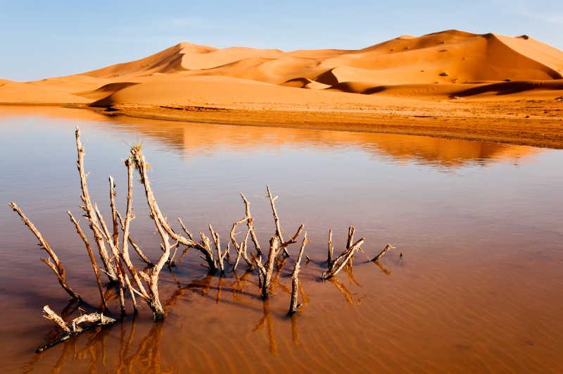 撒哈拉沙漠电影_沙漠图片素材-黎明阳光下著名的沙漠创意图片-jpg格式-未来素材下载