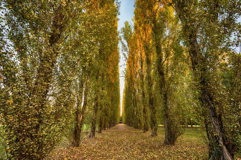 公园户外树木