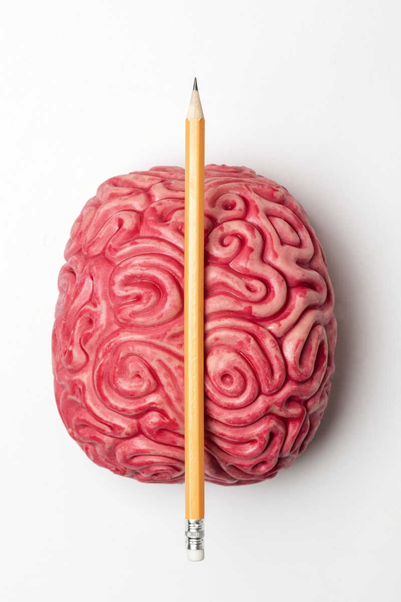 白色背景下的大脑结构概念和铅笔