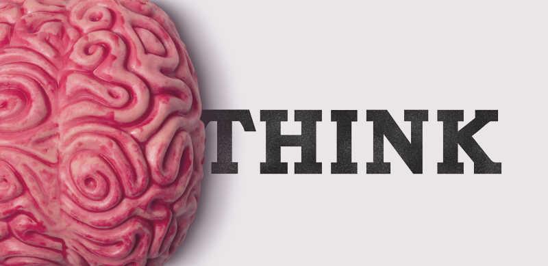 大脑器官概念
