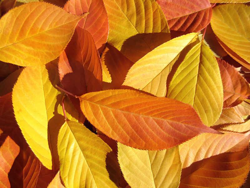 五颜六色的树叶