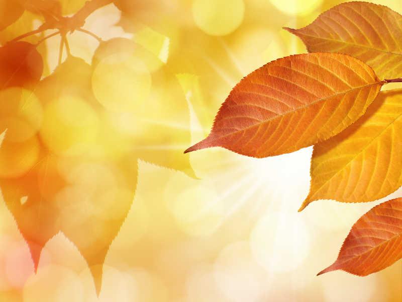树叶背景图
