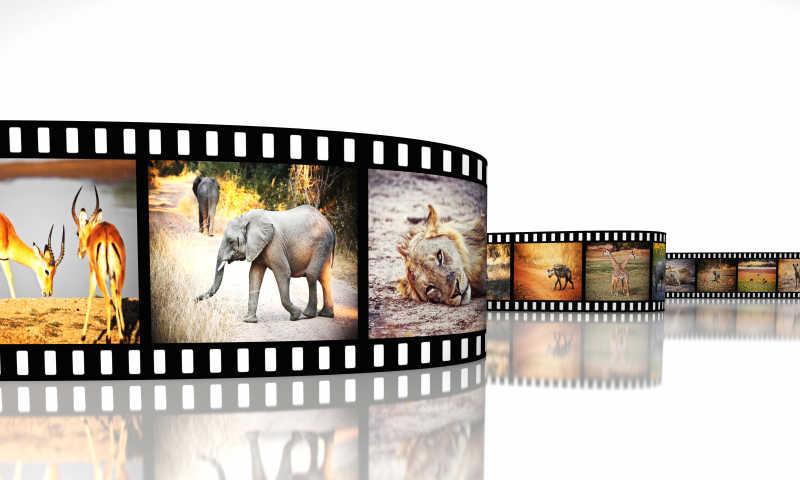 充满各种动物图像的胶片