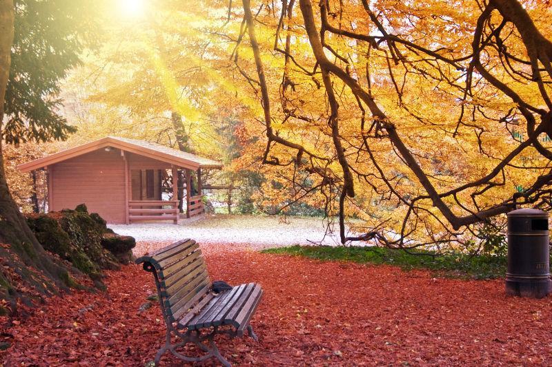 休息区树下的红色落叶