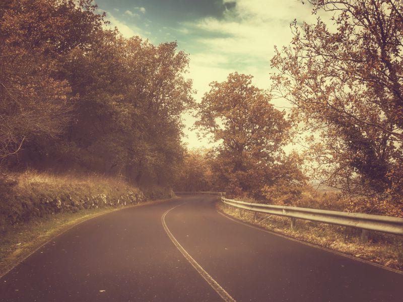 秋季森林的道路