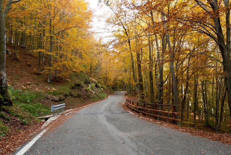 秋季森林自然风景的小路