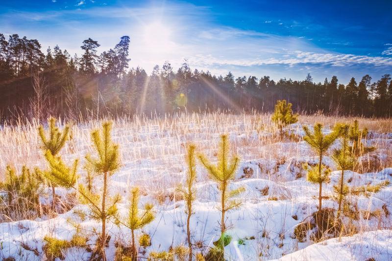 第一场雪覆盖了森林中干燥的黄色草