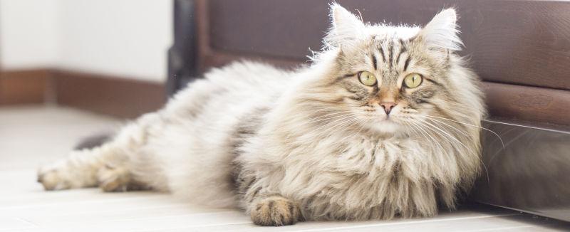 靠着房门的棕色长毛猫