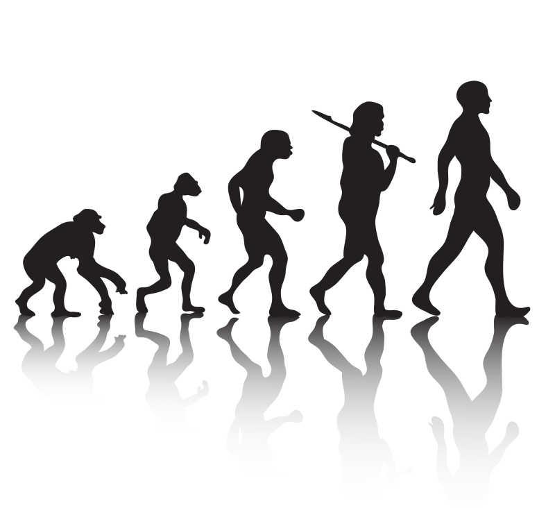 人类的进化过程矢量剪影